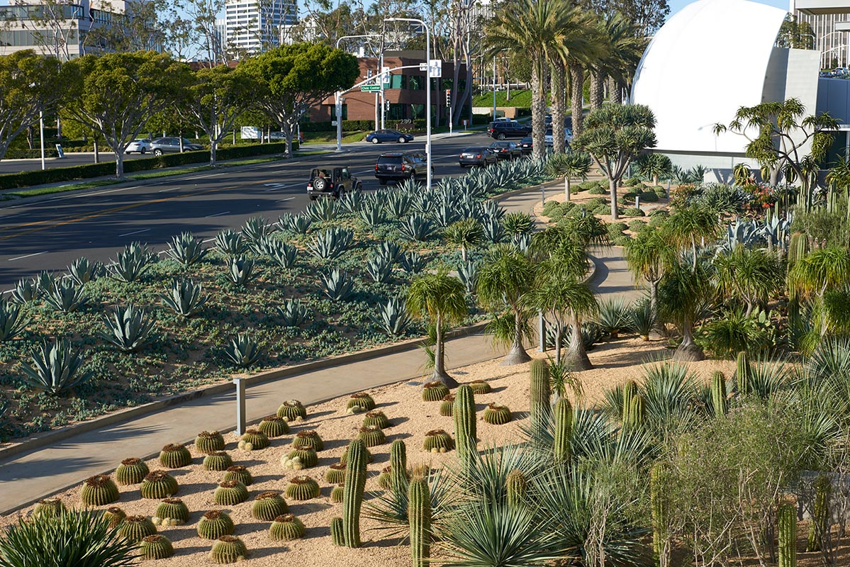 View from City offices overlooking Desert Garden and Avocado Avenue